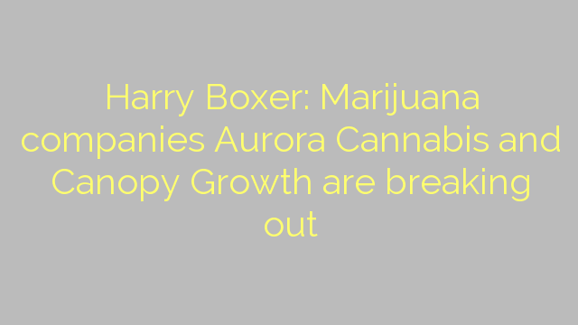 Harry Boxer: Marijuana companies Aurora Cannabis and Canopy Growth are breaking out