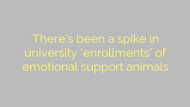 There's been a spike in university 'enrollments' of emotional support animals